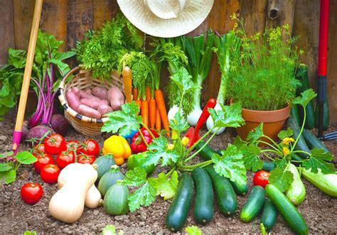 growing a vegetable garden for beginners vegetable gardening for the beginner wolf design