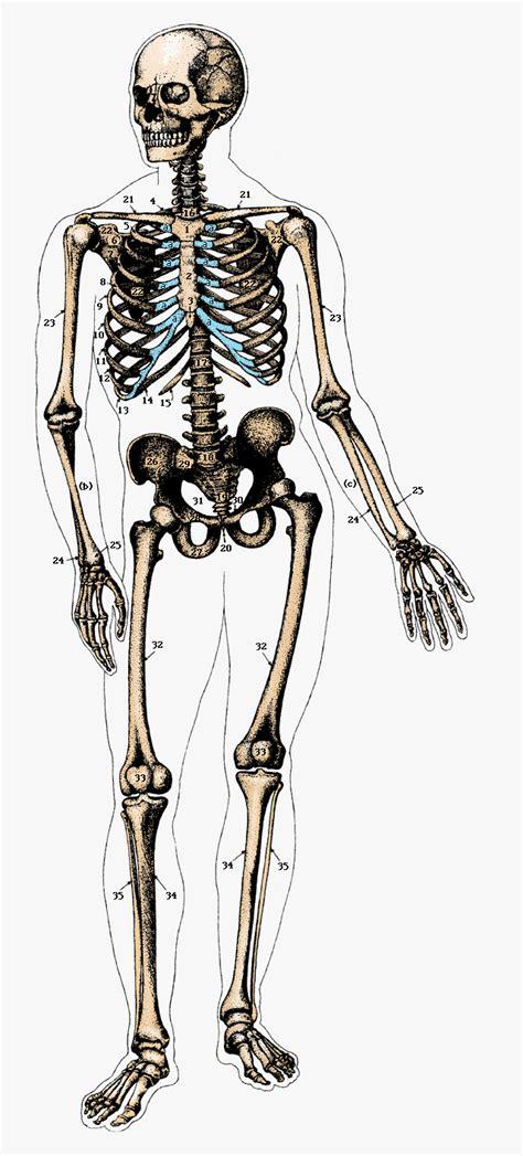 a skeleton semiotics thisistypoegraphic