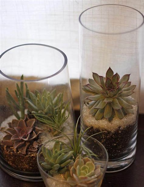 succulent planter ideas 15 best indoor succulent planting ideas that can beautify