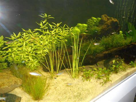 algue verte sur vitre et plante