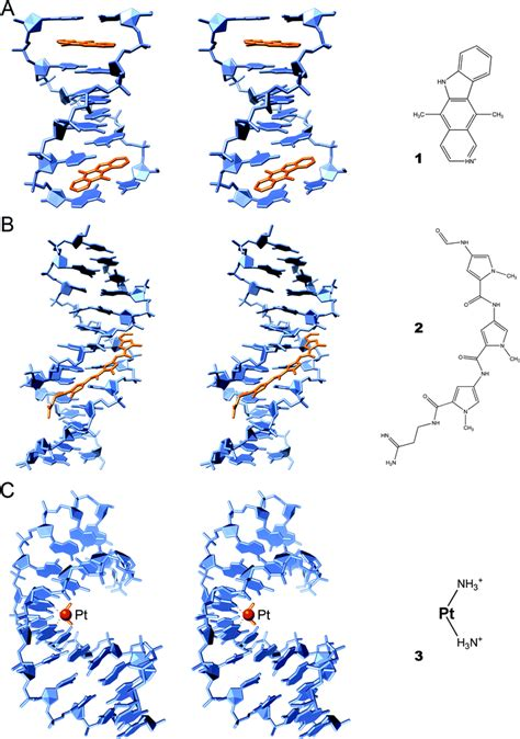dna binding dna binding drugs in the 3d pictures