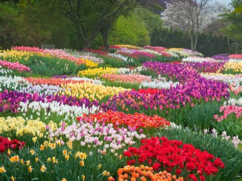 beautiful flowers in garden why you re sneezing the most beautiful flowers in bloom