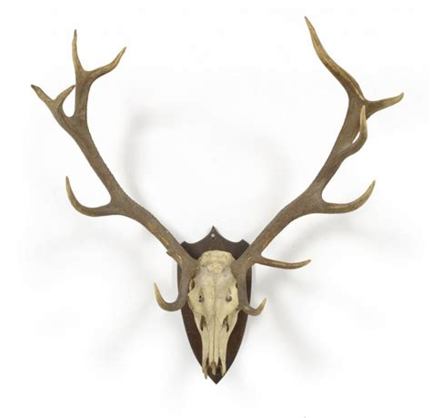 deer antler deer antlers new calendar template site