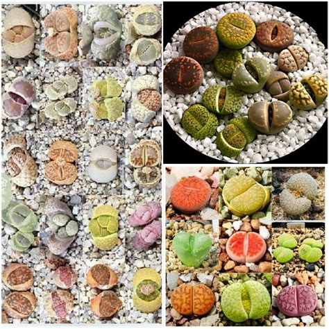 seed wholesale buy wholesale bulk garden seed from china bulk