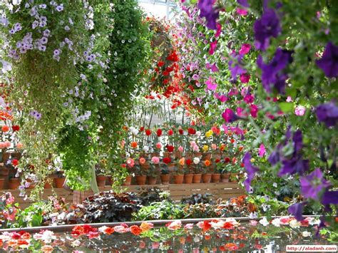 images of beautiful flower gardens beautiful home flower gardens wallpaper
