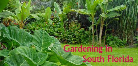 vegetable gardening in south florida planting a garden in florida 28 images florida plant