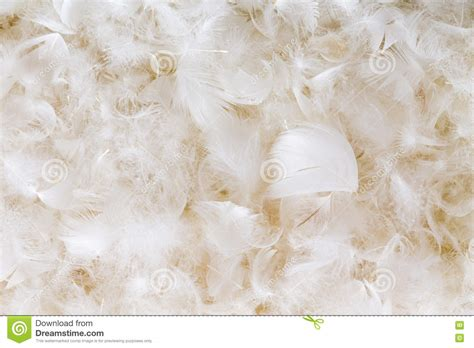 white feather lights light fluffy white feather background texture stock photo