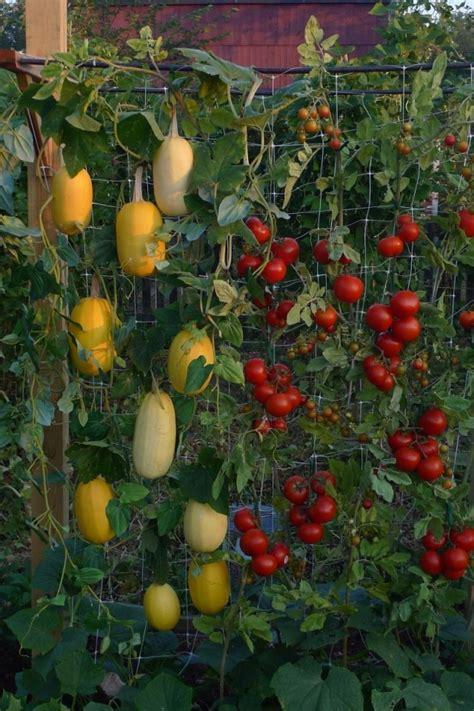 garden food ideas 20 vertical vegetable garden ideas vertical vegetable