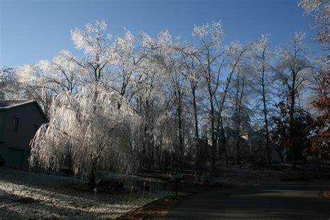 icicle tree icicle tree holbrook imagery trees