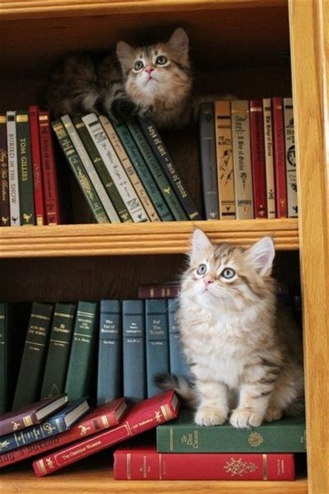 cat picture books cats in the stacks animais