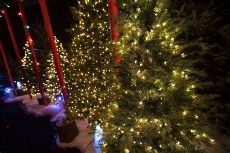 noma tree canadian tire canadian tire sues wal mart lights