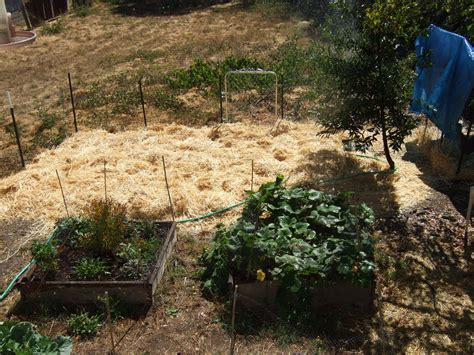 straw mulch vegetable garden mulches types and uses homestead and gardens