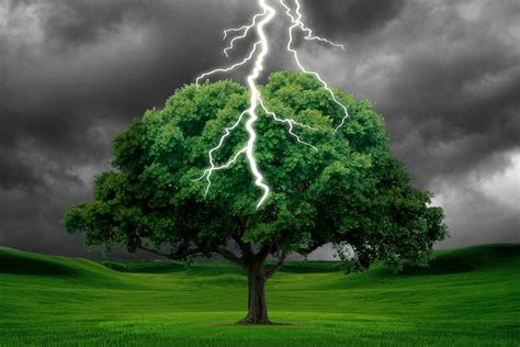 lighting trees what happens when a tree is struck by lightning 187 science abc