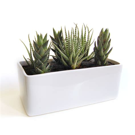 cactus planters cactus garden gloss planter lush modern touch of modern