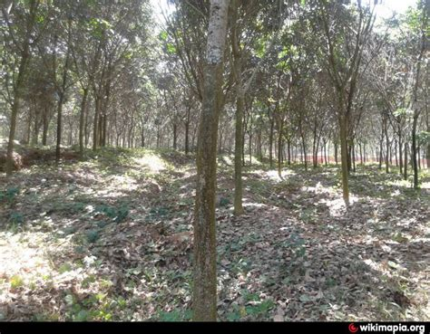 rubber st plantation vadakken rubber plantation