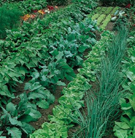 crop rotation home vegetable garden using crop rotation in home vegetable garden wisconsin