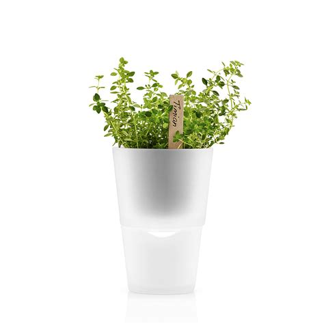 herb pot buy herb pot 11cm frosted glass amara