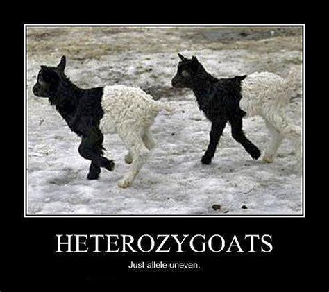 biology meme   Tumblr Genetics Jokes