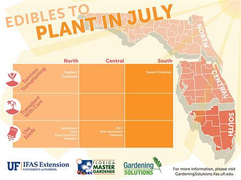 vegetable gardening in south florida vegetable gardening by season gardening solutions