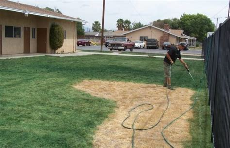 spray painting your lawn californians pay to their lawns spray painted green