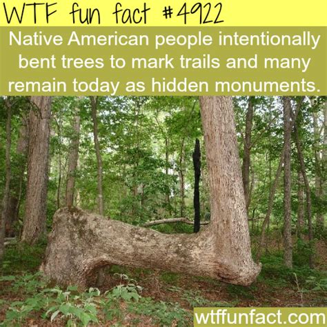 tree facts trivia tree bending facts