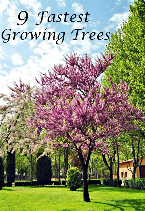 fast growing trees fast growing trees search engine at search