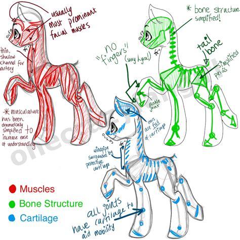 paint tool sai tutorial mlp pony anatomy by ramidole on deviantart