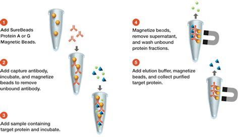 igg sepharose surebeads protein g magnetic science