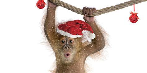 monkey santa bare bones marketing brand santa bare