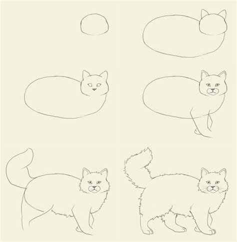 cat step step cats how to draw a cat how to draw
