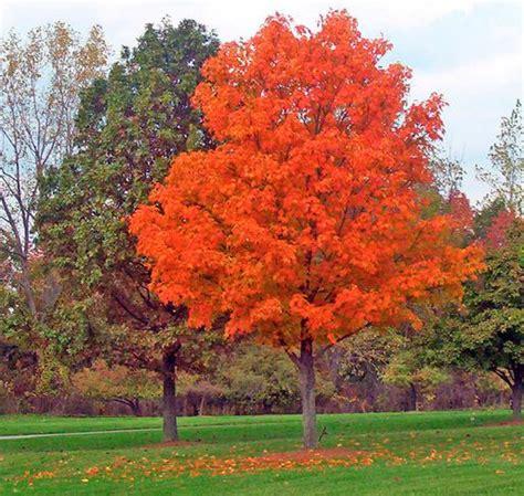 types of trees to rhode island tree service ri