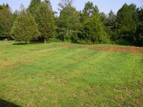 grass garden ideas need landscaping ideas and or websites for ideas grass