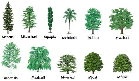 all tree swahili land aina za miti types of trees