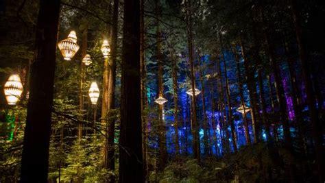 rotorua lights rotorua treewalk opens time walk illuminated by
