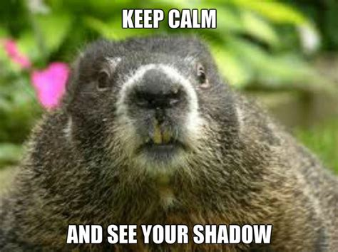 groundhog day karma 442 best images about just for on brad