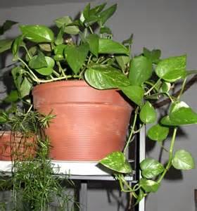 plante d interieur et de veranda le de capucine30