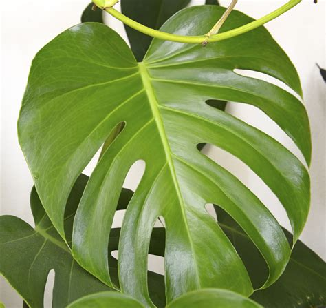 Plants Low Light the best low light plants for indoors