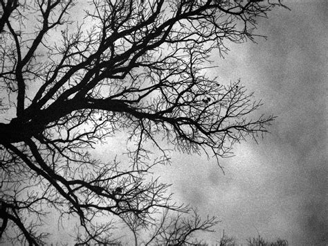 black and white tree shravanguptaphotographer shravan gupta photographer page 5