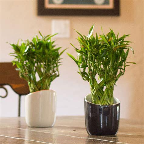best plant for indoor low light 10 best low light houseplants costa farms
