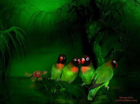 spray paint emerald forest bird series strange four birds in emerald