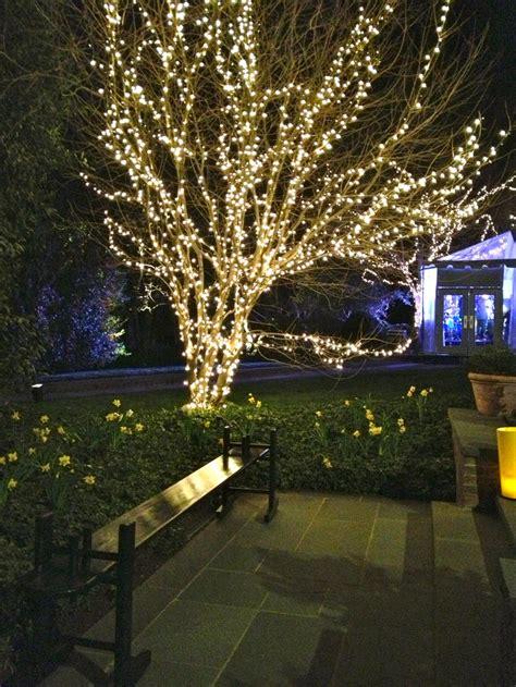 tree lighting ideas best 25 outdoor tree lighting ideas on