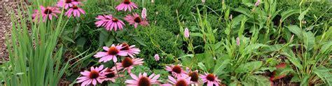 Der Pflegeleichte Garten by Der Pflegeleichte Garten Pflegeleicht Gemacht