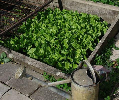 self sufficient vegetable garden a comprehensive guide to growing a home vegetable garden