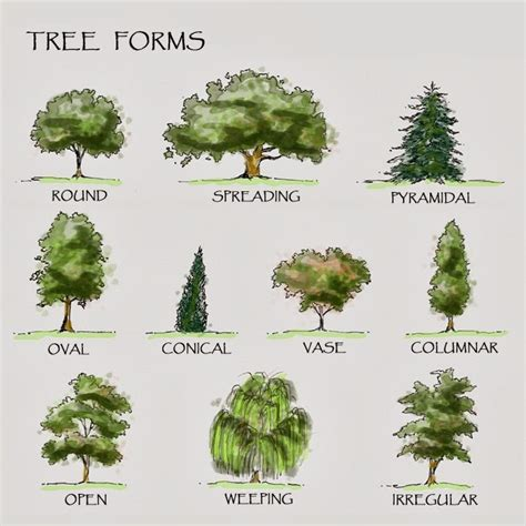 tree shapes defining the form and branch styling in