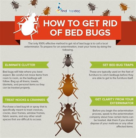 Get Rid Of Bed Bugs Fast by How To Get Rid Of Bedbugs Fast