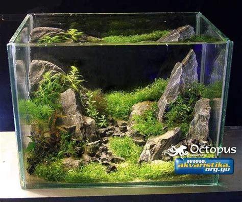 best 25 nano aquarium ideas on betta tank fish tank and nano tank