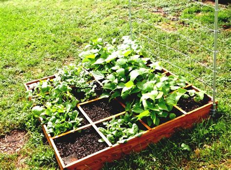 simple vegetable garden ideas simple backyard vegetable garden ideas landscaping simple