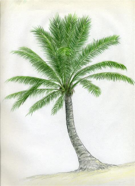 tree drawing how to draw palm trees