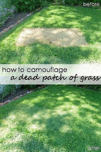 spray painting your lawn 196 best images about front yard landscaping on