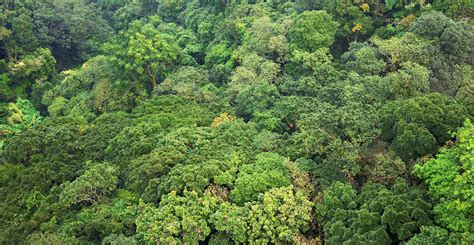 Canupy Content by Tropical Rainforests